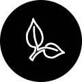 Leaves Icon